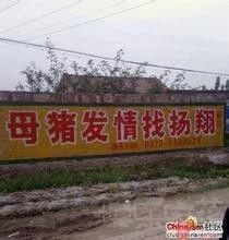 母猪发情找杨翔?????