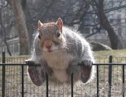 快给我点吃的,我马上就走