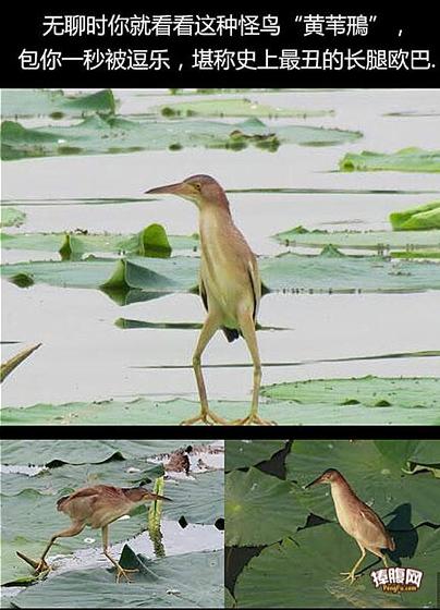 鸟中的大长腿