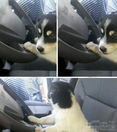 开车谁不会